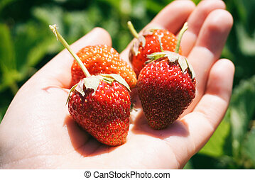 Sunny strawberries on a hand closeup