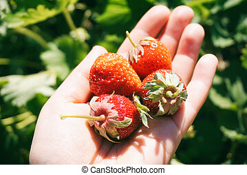 Sunny strawberries on a hand