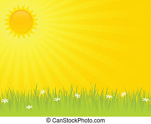 Sunny summer day with grass and daisies.