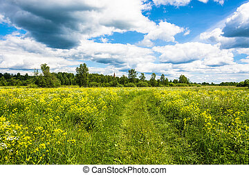 Sunny summer landscape with yellow flowers.