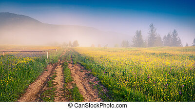 Sunny summer morning in the Carpathians. Foggy rural scene ...