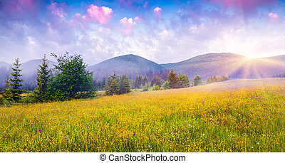 Sunny summer morning in the foggy Carpathian mountains