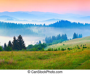 Sunny summer morning in the foggy Carpathian mountains.
