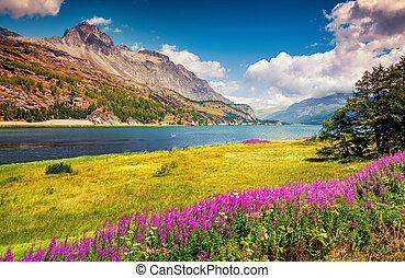 Sunny summer scene on the Silsersee lake