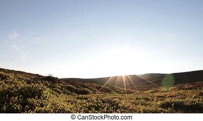 Sunny tundra  - Slider shot in sunny summer tundra landscape