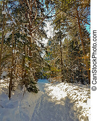 Sunny way in winter snowy forest
