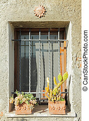 window with cacti