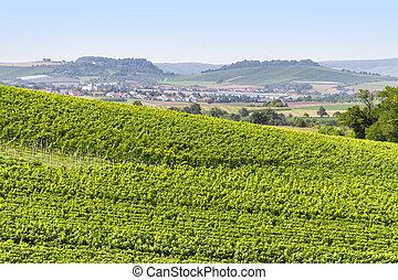 winegrowing scenery in Hohenlohe - sunny winegrowing scenery...