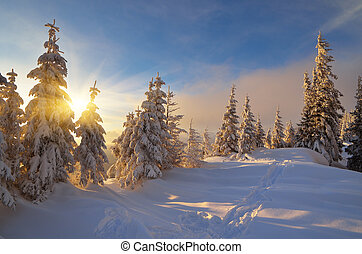Sunny winter evening - Winter landscape of a forest in a...