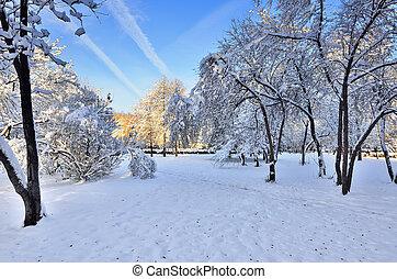 Sunny winter landscape in city park