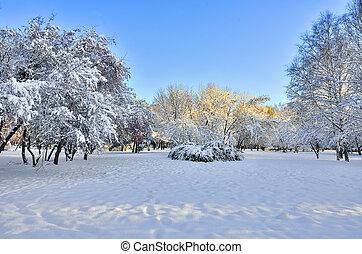 Sunny winter landscape in rhe city park