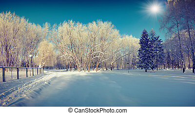 Sunny winter landscape in the city park.
