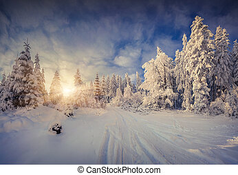 Sunny winter morning in the mountain forest