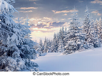 Sunny winter morning in the mountain forest.