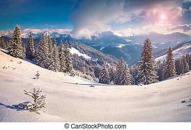 Sunny winter morning in the snowy mountains.