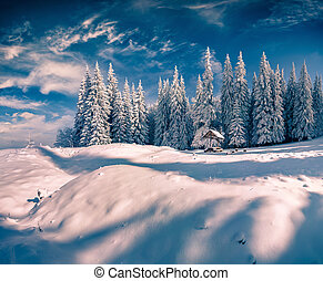 Sunny winter scene in the mountain forest