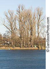 sunny winterday - some trees near a frozen lake with a blue...