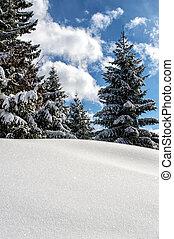 Sunny Winterday - Sun reflex on the snow on a sunny...