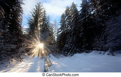sunrais in forest
