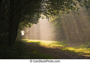 Sunrays and mist - Sunrays through the trees on a misty ...