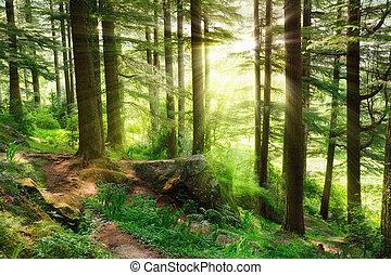 sunrays, caer, en, un, vibrante, bosque verde
