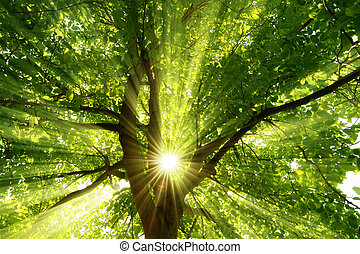 Sunrays dramatically falling through a tree - The warm ...
