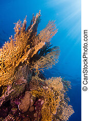 Sunrays in the coral garden