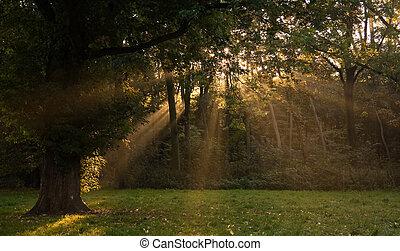 Sunrays through the trees in autumn