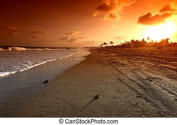sunrice, אוקינוס