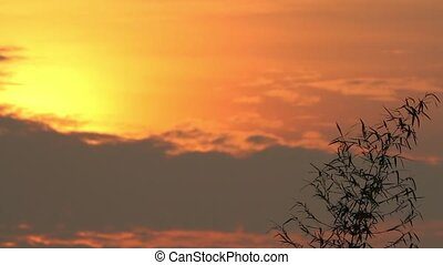 Sunrise and Bamboo Leaves - footages of bamboo silhouette...