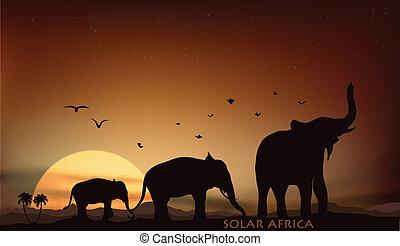 sunrise and sunset over the savannah