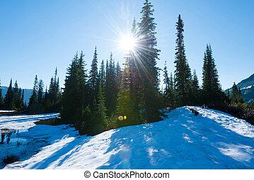 Sunrise at Mount Rainier National Park, Washington State, USA