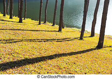 Sunrise at Pang-ung, pine forest park in north thailand