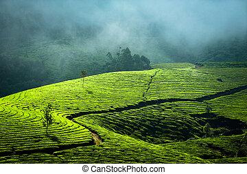 Sunrise at tea plantation. India, Munnar, Kerala - Early ...