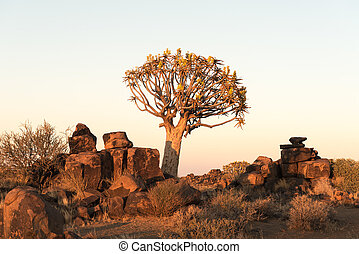 Sunrise at the quiver tree forest at Garas Park