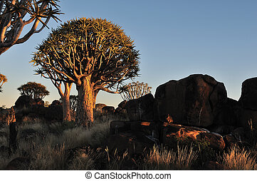 Sunrise at the Quiver Tree Forest, Namibia