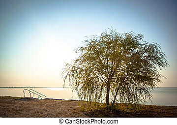 Sunrise at the Small Sea with alone tree