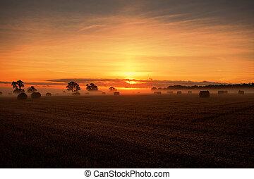 sunrise bales