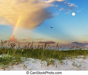 Sunrise beach scene - Sea oats growing on beach with...