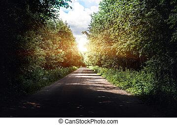 Sunrise beautiful road in forest