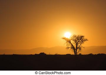 Sunrise behind a tree in the Namib desert