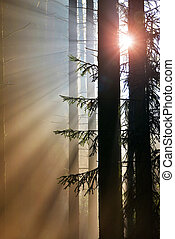 Morning scene with sunbeams in the misty forest.