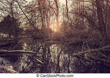Sunrise by a forest lake in the winter