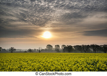 Sunrise dawn landscape over rapeseed canola field