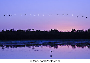Flock of Birds over colorful sky at sunrise