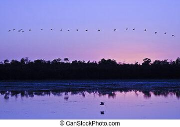 Sunrise - Flock of Birds over colorful sky at sunrise