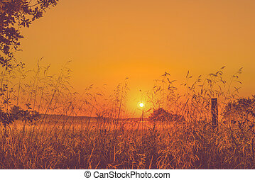 Sunrise in a countryside mist