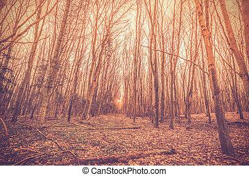 Sunrise in a danish forest