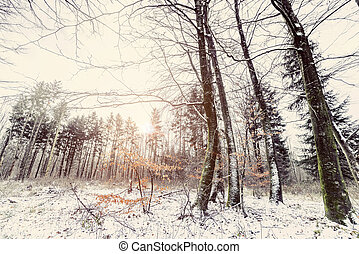 Sunrise in a forest in the winter