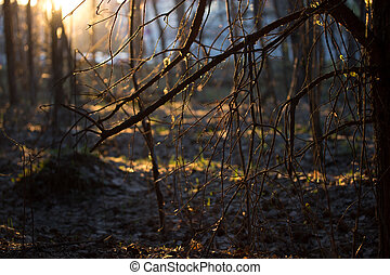sunrise in a forest,